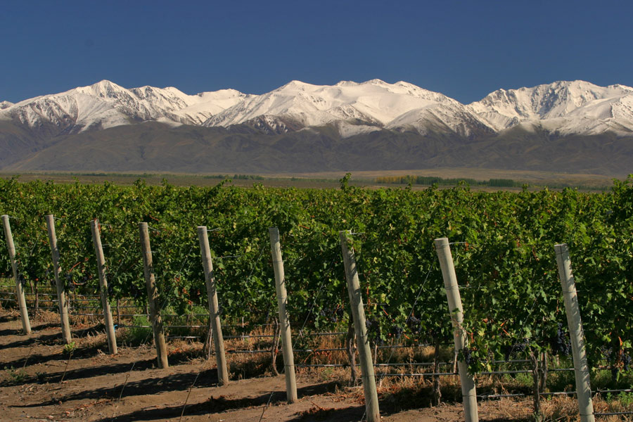 que son los vinos organicos